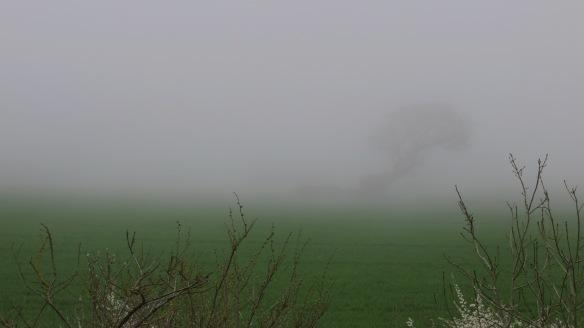 Tree in sea mist  3