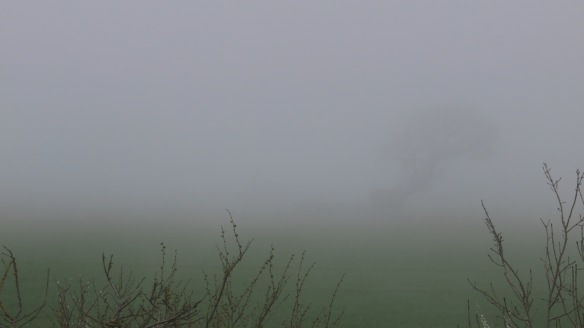 Tree in sea mist 4