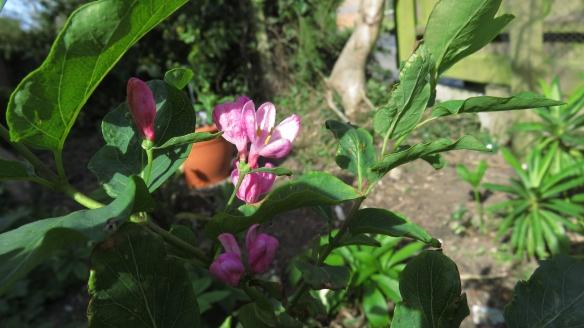 Unidentified shrub