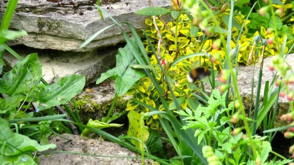 Bee struggling
