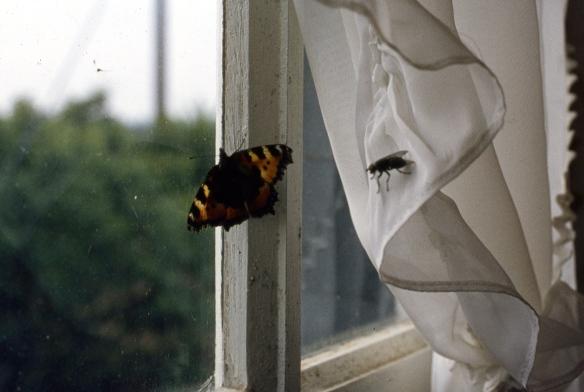 Fly & Butterfly 9.82 002