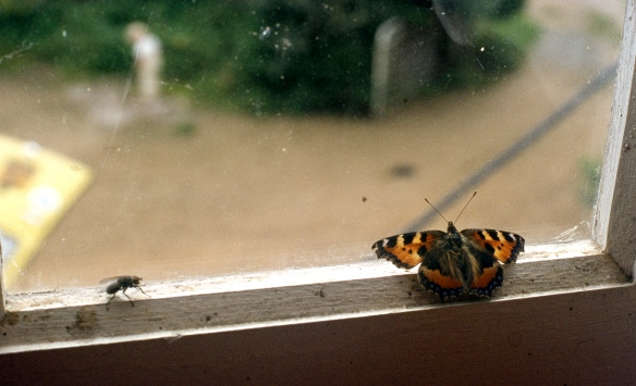 Fly & Butterfly 9.82 003