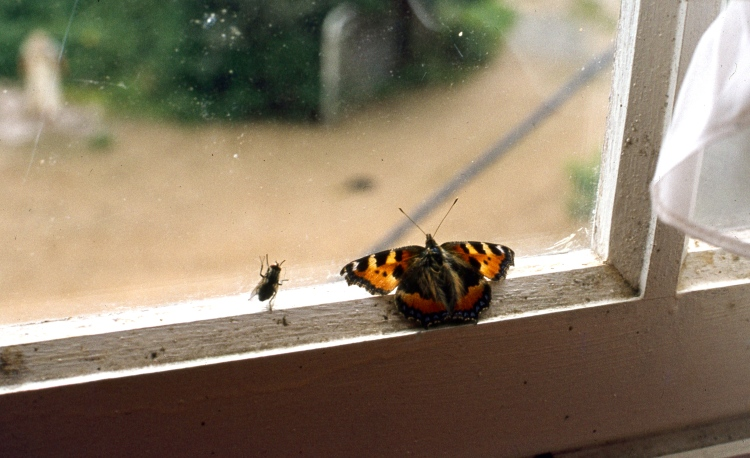Fly & Butterfly 9.82 004