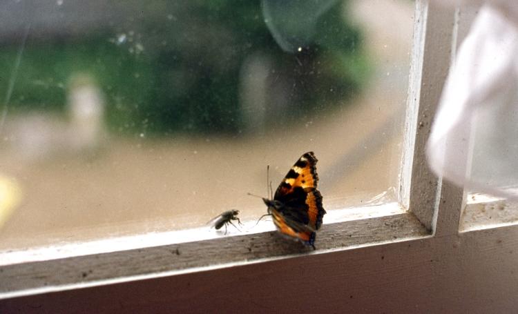 Fly & Butterfly 9.82 005