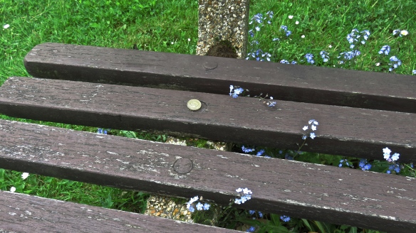 Forget-me-nots and £1 coin