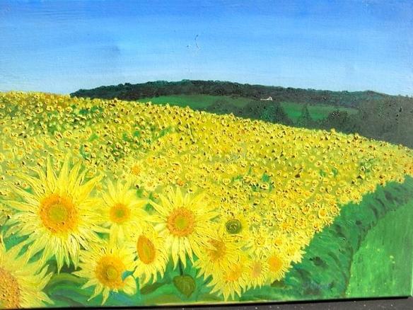 Judith's sunflowers