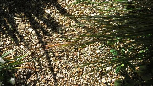 Shadow, grass, gravel