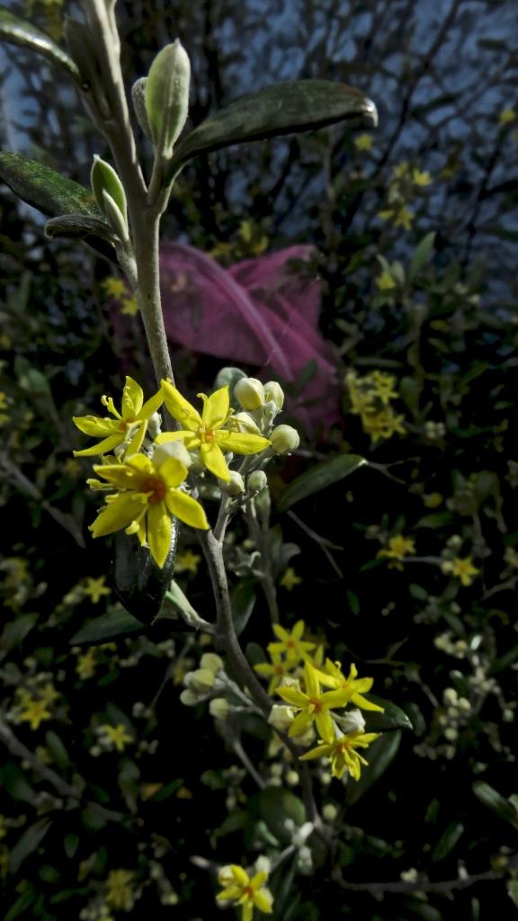 Spiky shrub