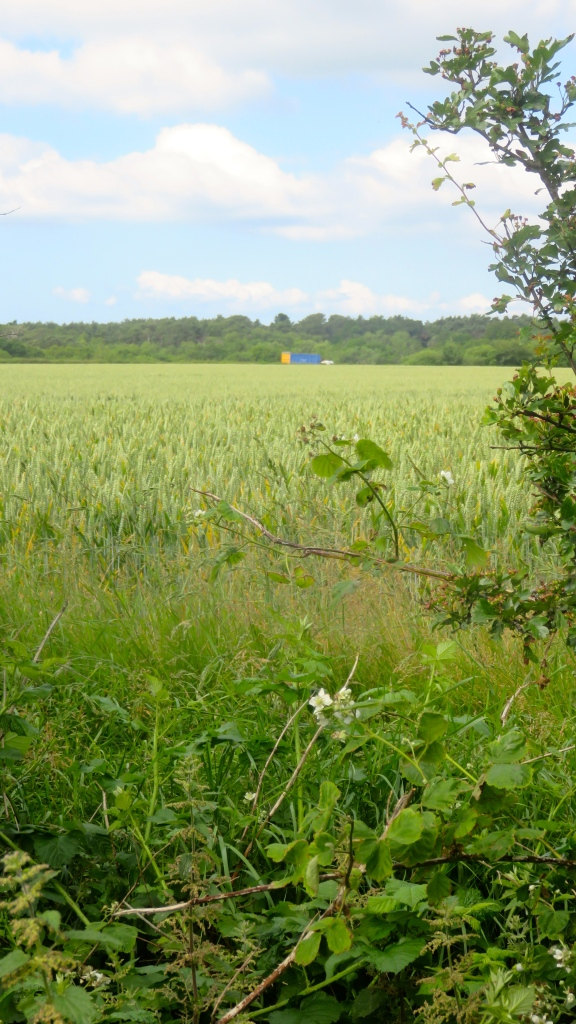 Barley field and lorry