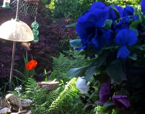 Blackbird, poppy, frog