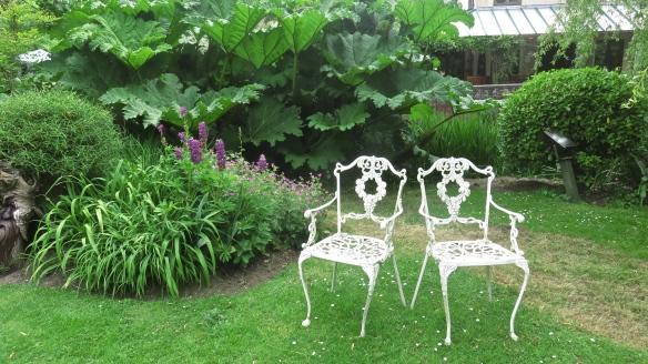 Chairs and gunnera