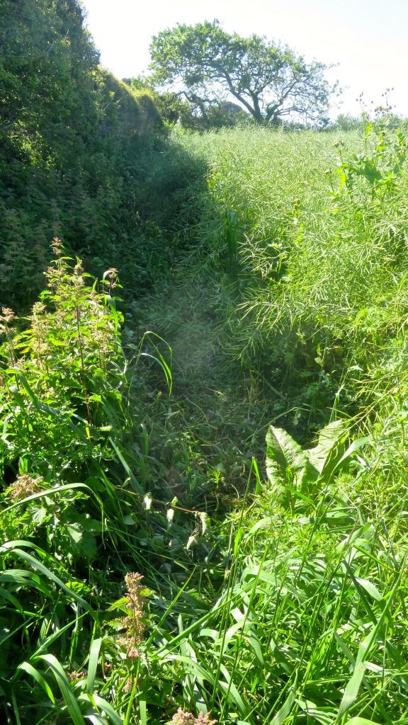 Footpath less overgrown 1