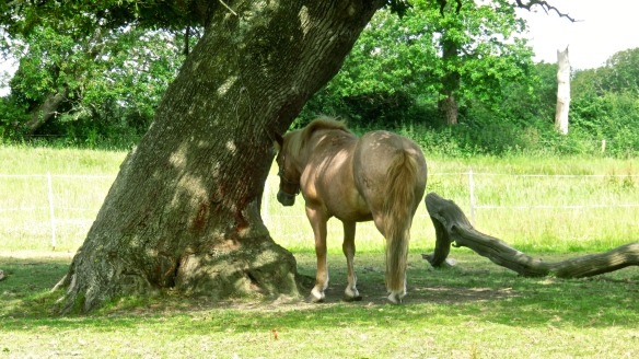 Horse and oak