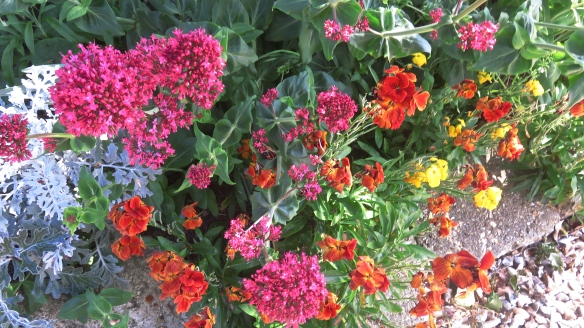Valerian and wallflowers