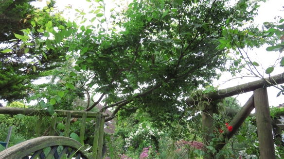 Branches to be pruned