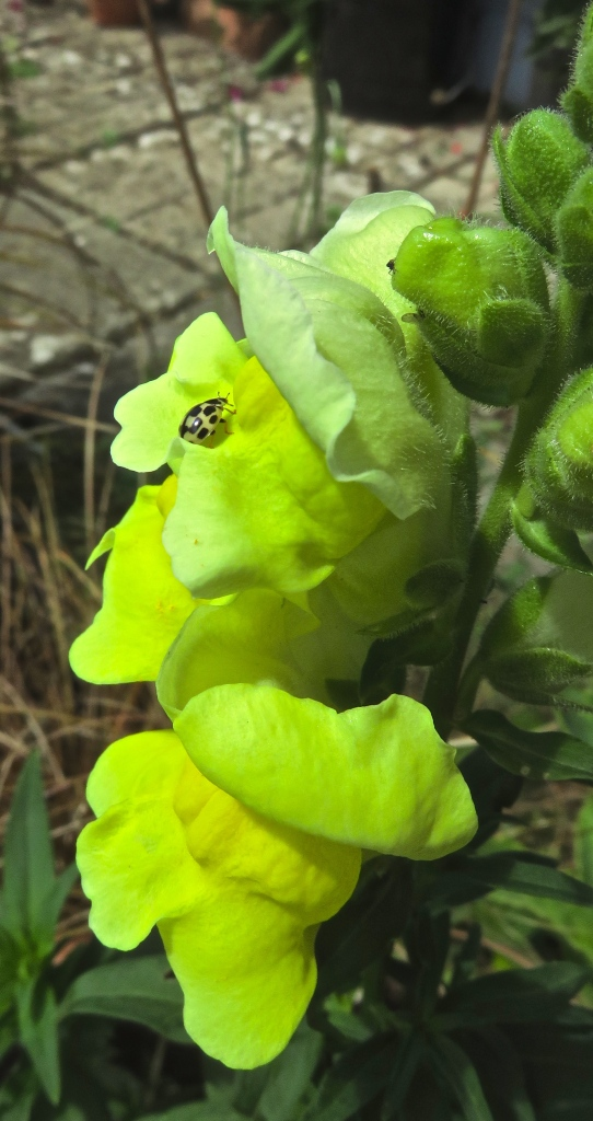 Bug on snapdragon
