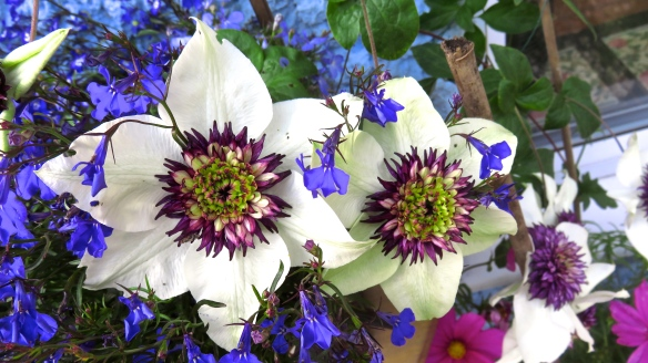 Clematis Passion Flower