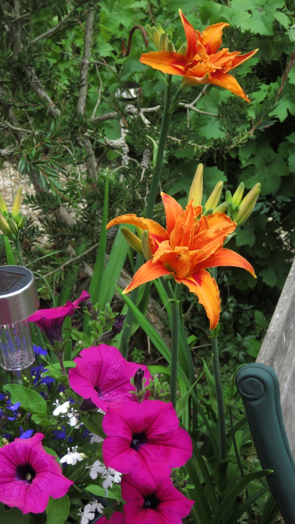 Day lilies and petunias