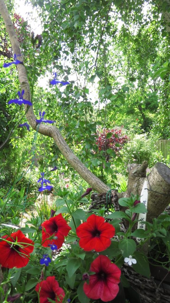 Heligan Path through hanging basket