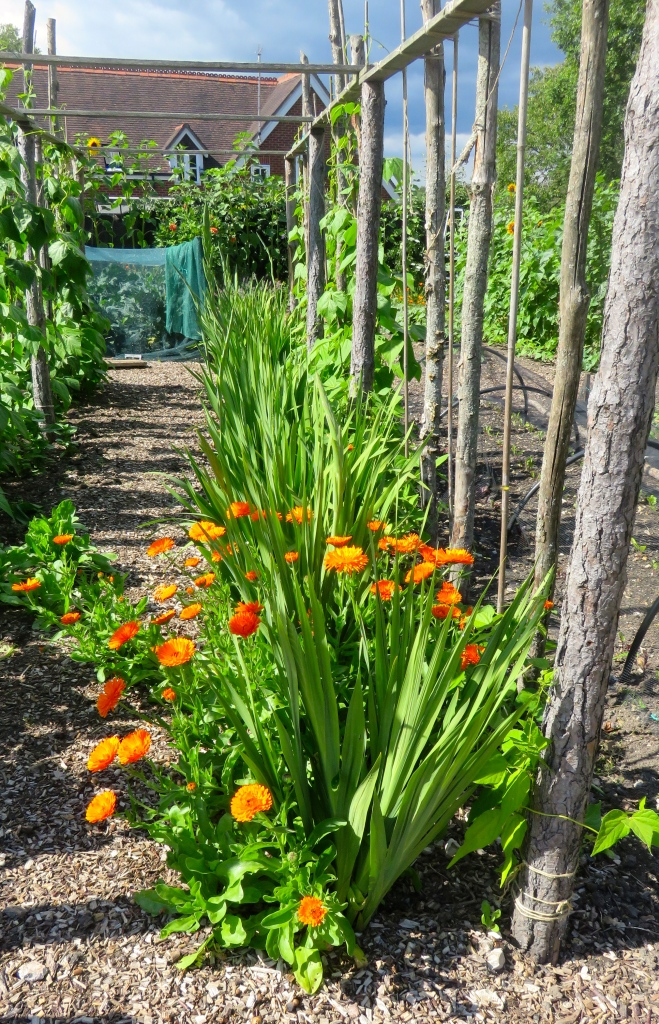 Marigold path
