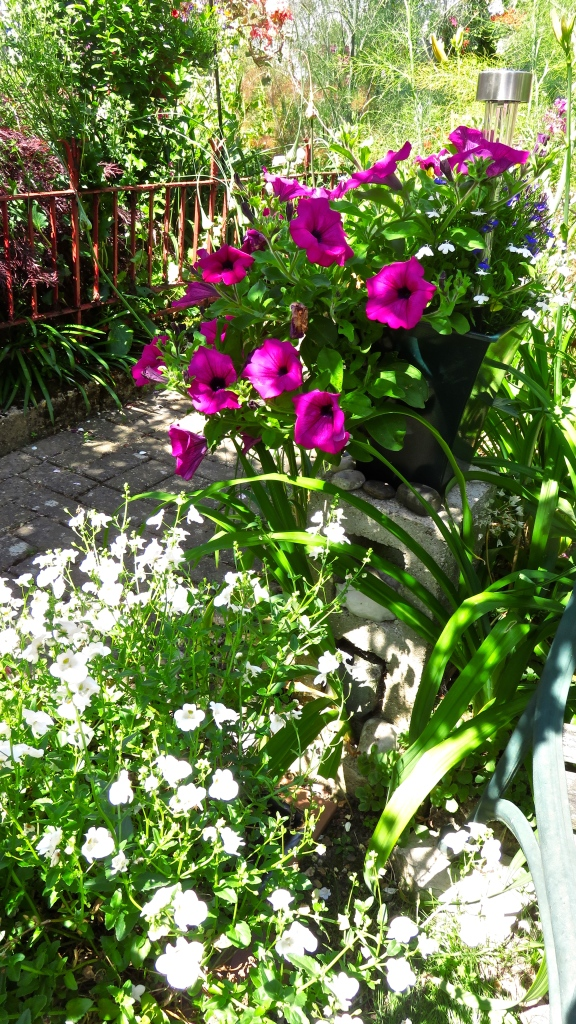 Petunias on edge of brick path