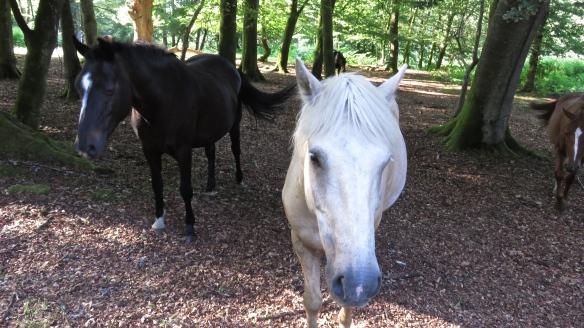 Ponies up close