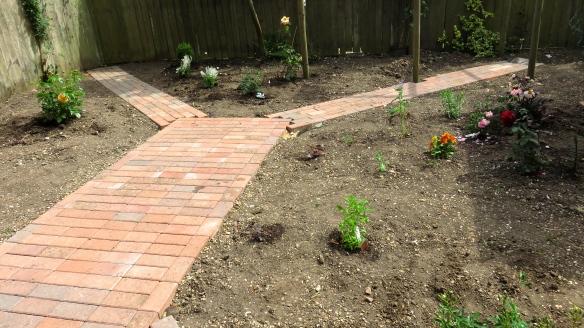 Rose garden planting