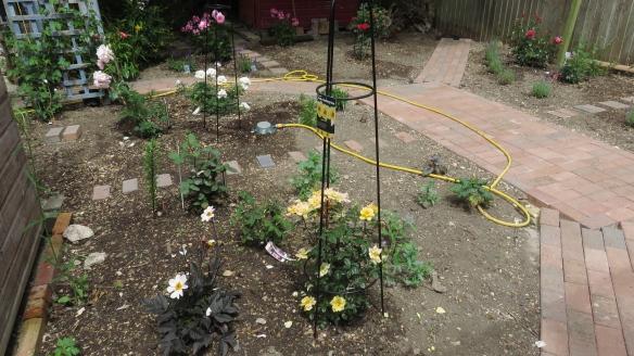 Rose garden work in progress 1