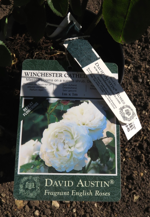 Rose - Winchester Cathedral label