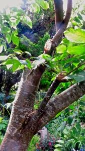 Sawn branch