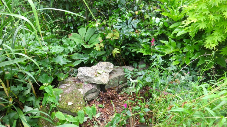 stone wall in shrubbery