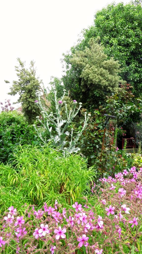 Thistle and geranium palmatums