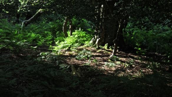 Woodland 8