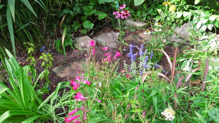 Echinaceas, salvias, rudbeckia perovskia