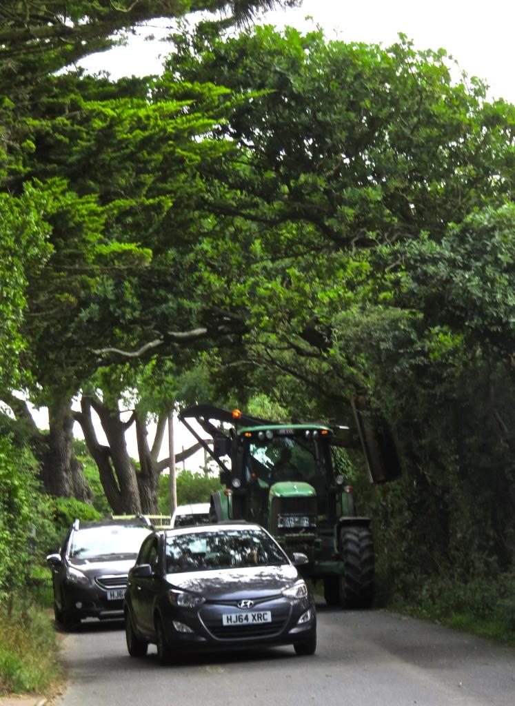 Hedge cutting 3