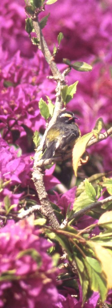 Sunbury bird 5.04
