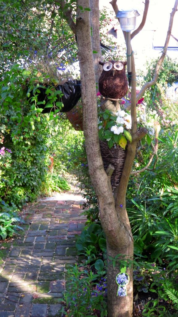Brick path, dead snake bark maple, owl