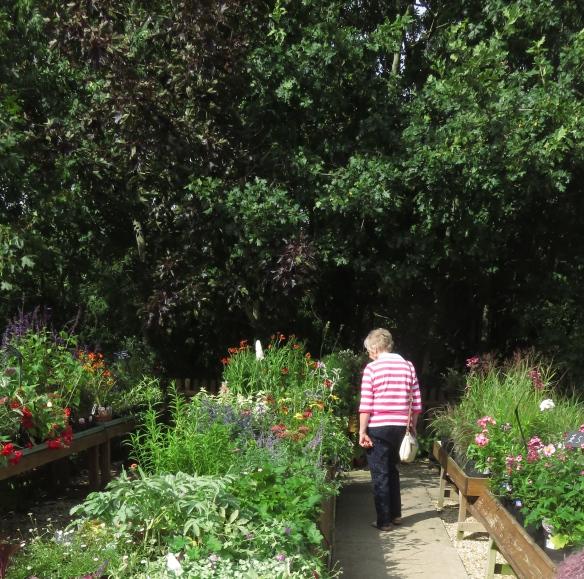 Helen in garden