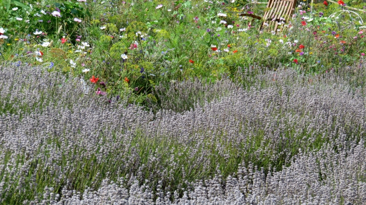 Lavender and more