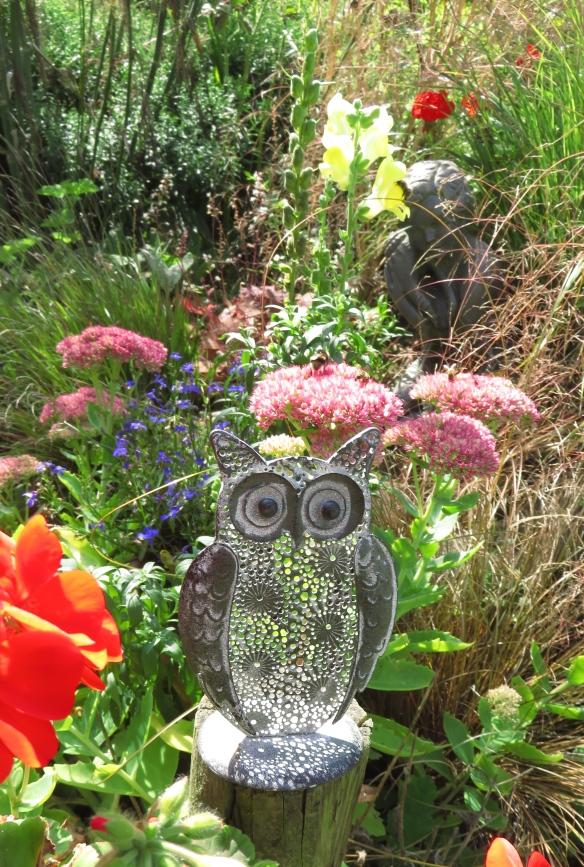 Owl, and bess on sedums
