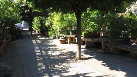 Trees in pots 1