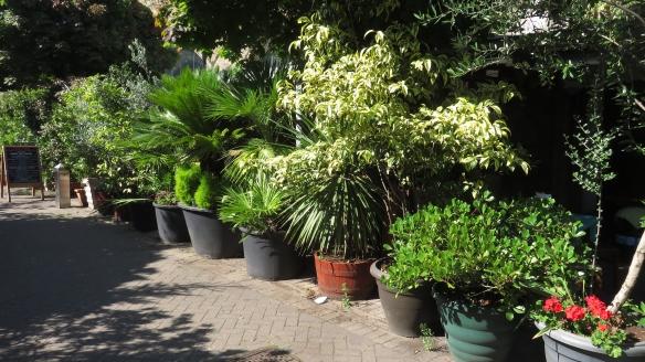 Trees in pots 2