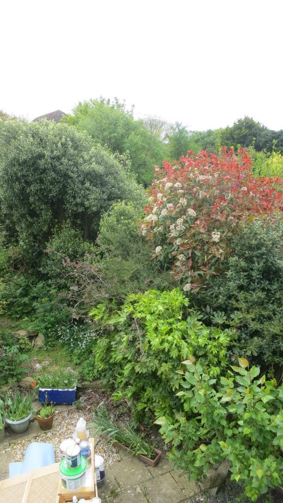 Garden 7.5.14