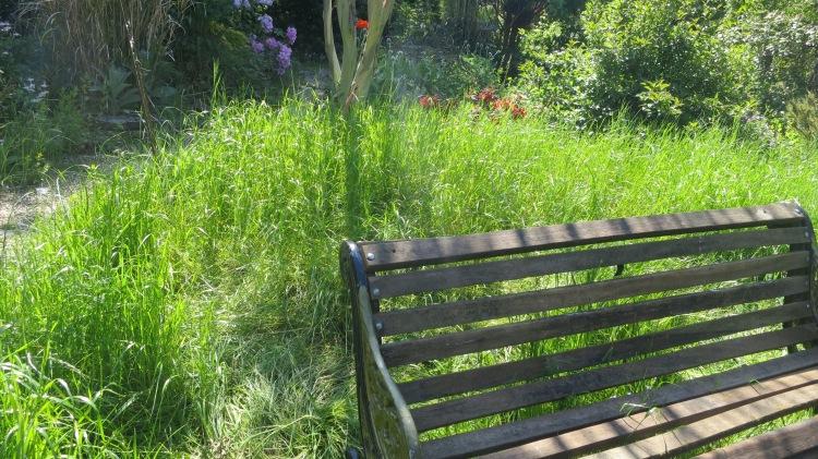 Grass needing cutting