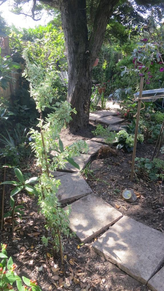 Path round fir tree