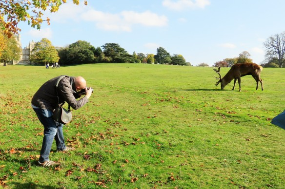 Photographing stag