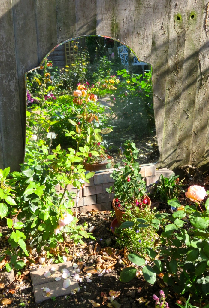 Rose garden in mirror