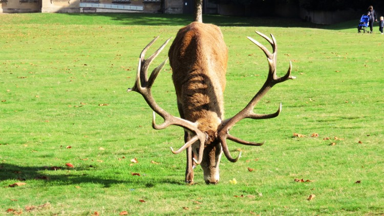 Standing stag 2