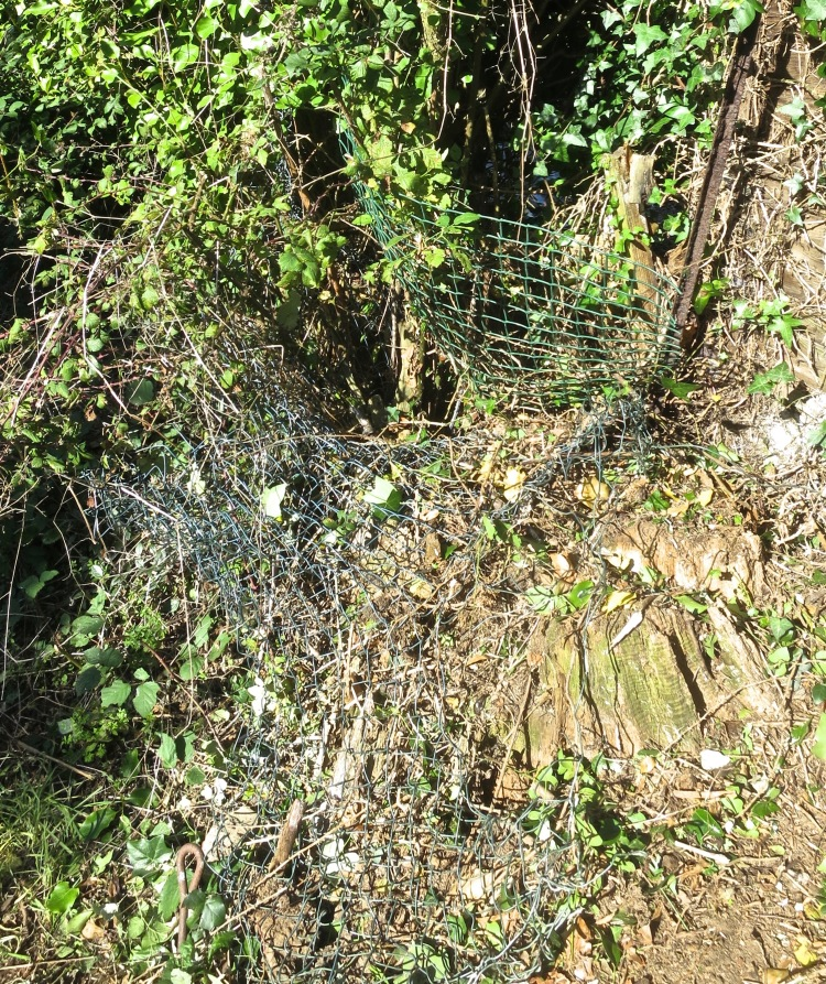 Wire netting in hedge 1