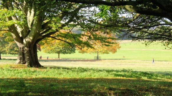 Wollaton Deer Park 1